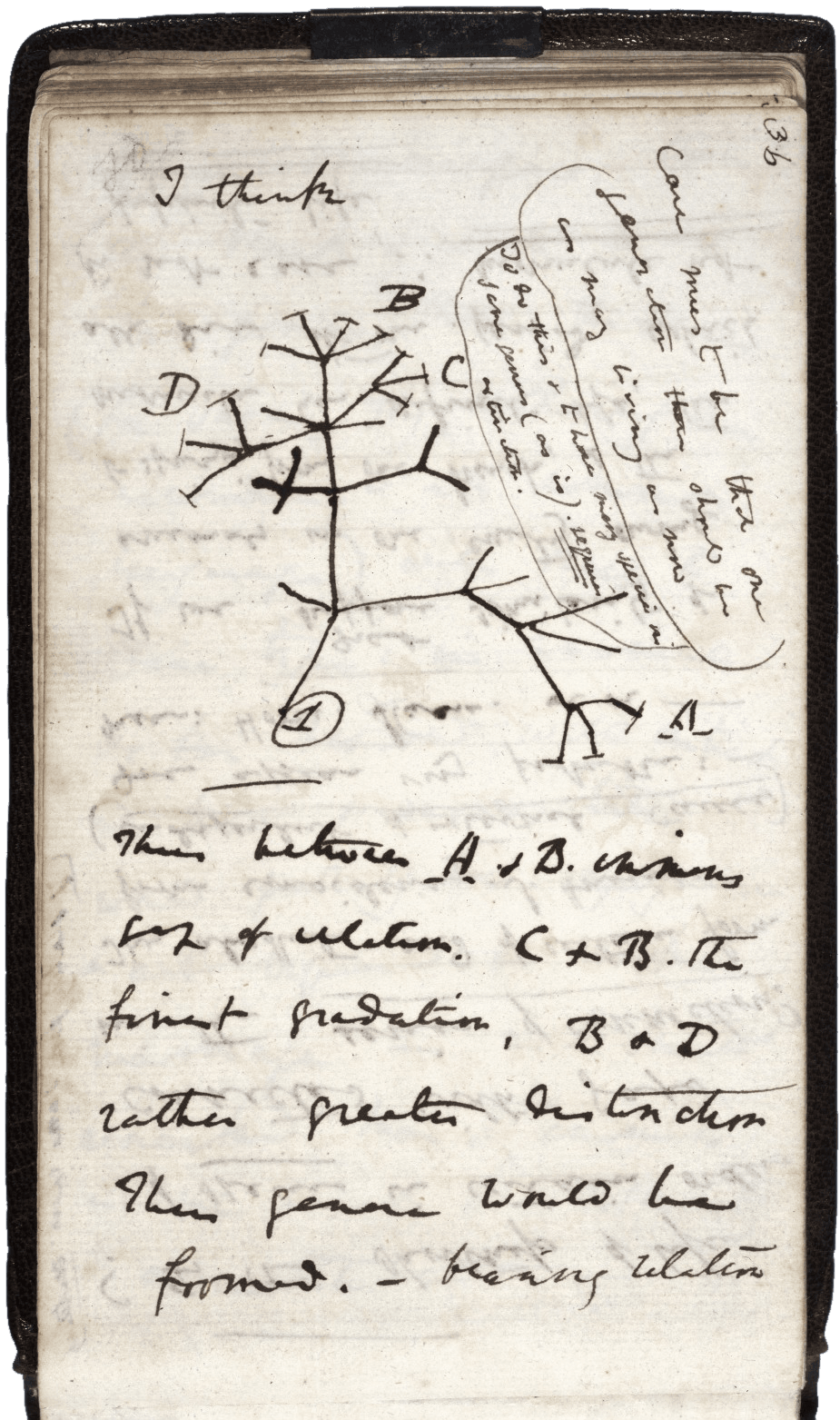 natural selection in the human body medicor darwin tree